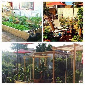 Sophea's garden