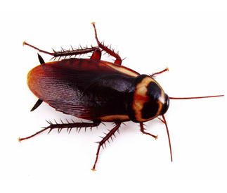 Roach picture