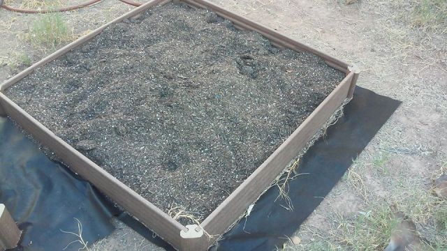 New garden picture